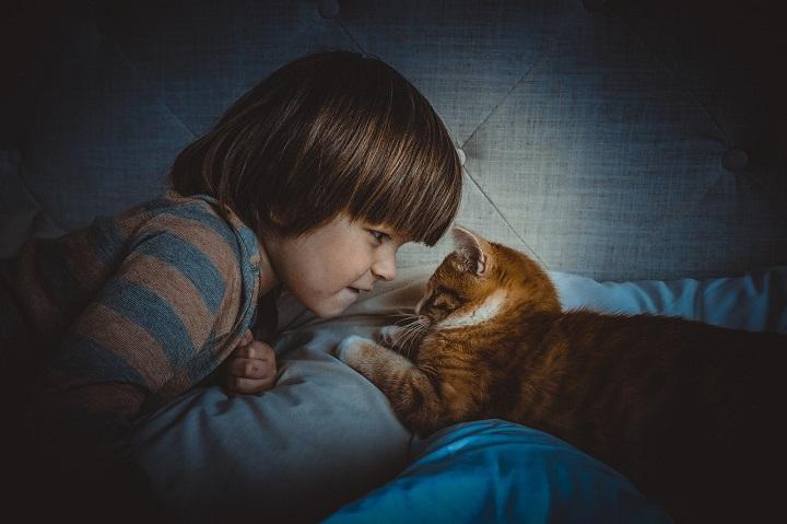 Los gatos se conectan como los seres humanos